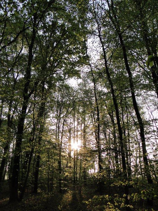 Forêt Selle Guerchaise